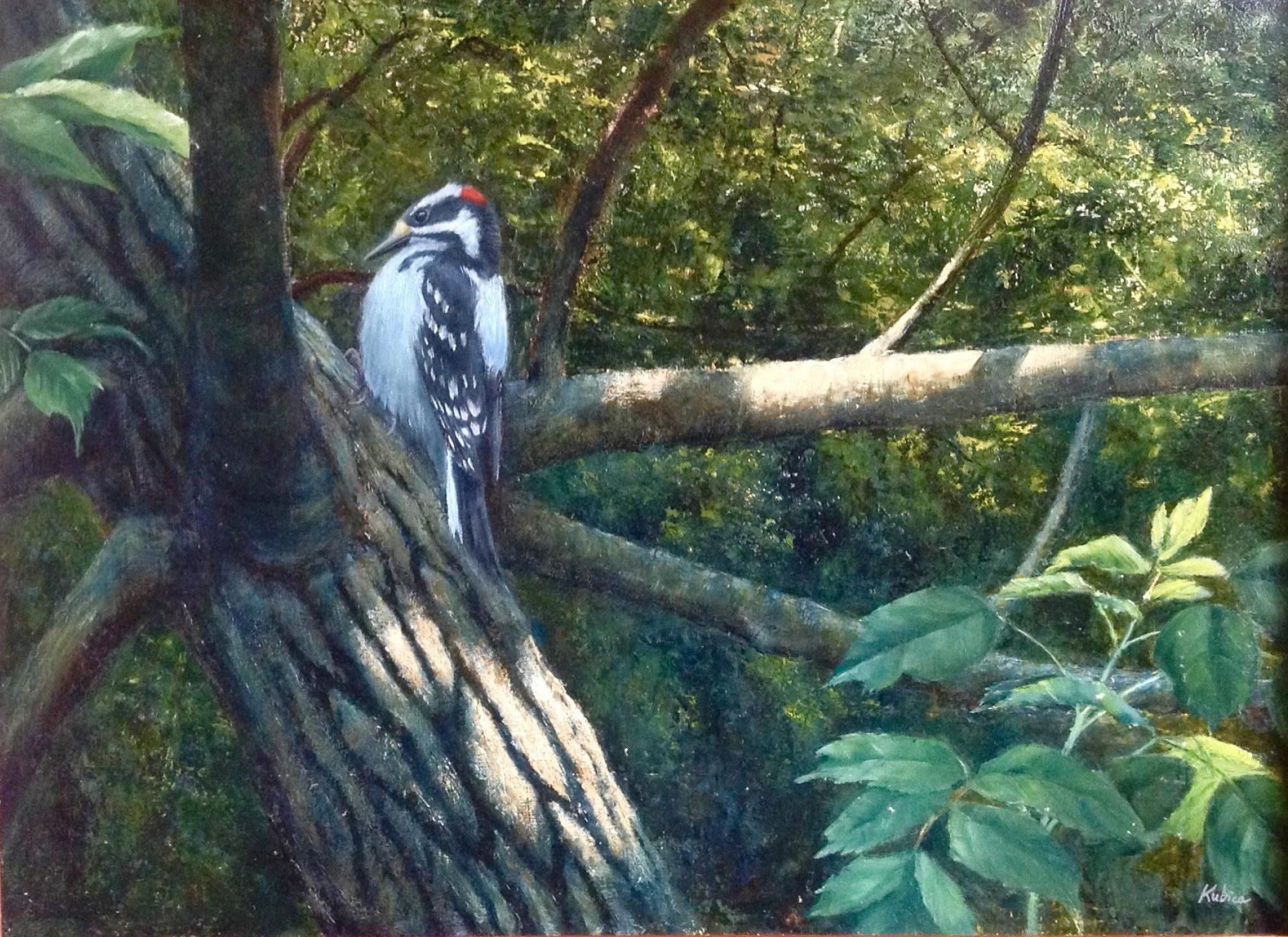 Shady Grove - Hairy Woodpecker by Robert Kubica