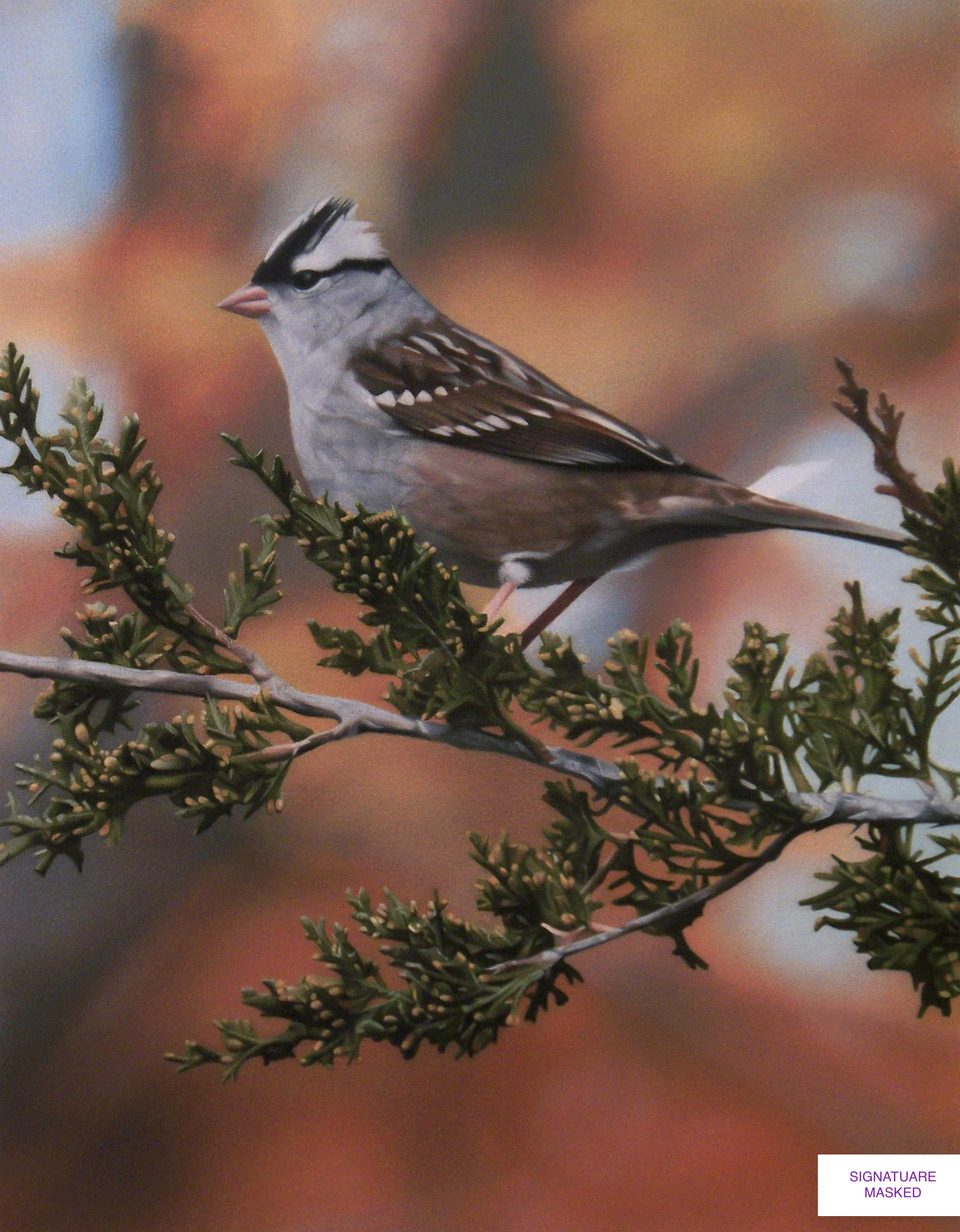 White-crowned Sparrow in Autumn by Jesse Strong