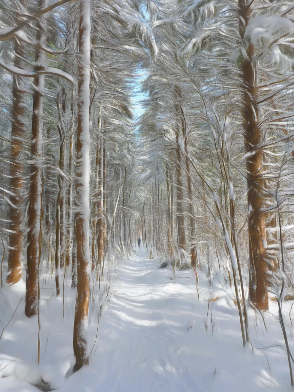 Winter Wonderland in Loree Forest By Rick DaSilva