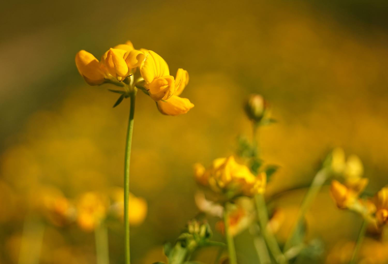 Mellow Yellow by Kai Johne