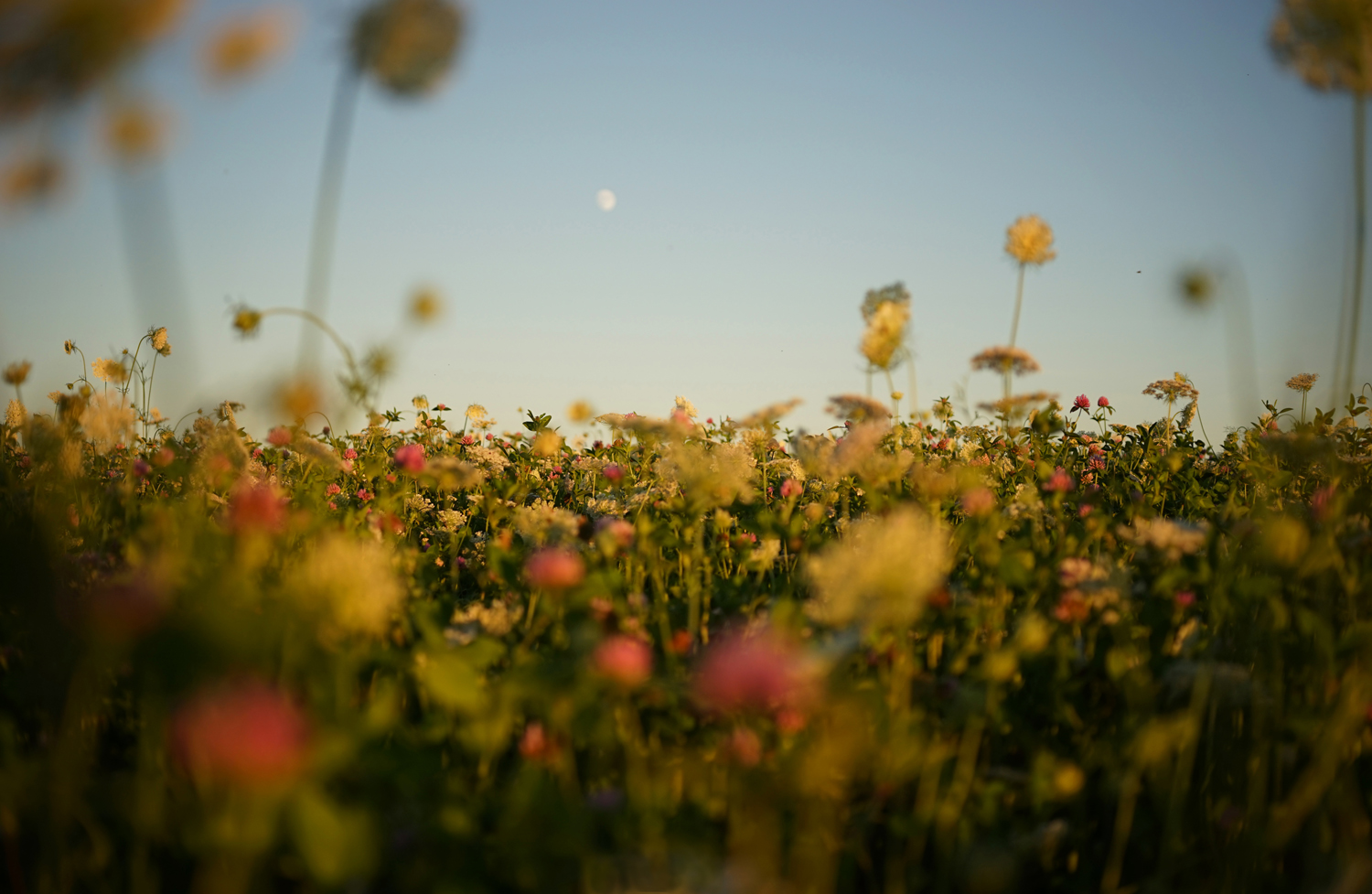 Field of Dreams by Kai Johne