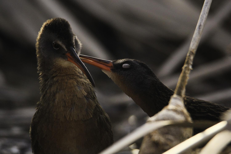 A Blushing Bird's Stolen Kiss by Hannah Stockford