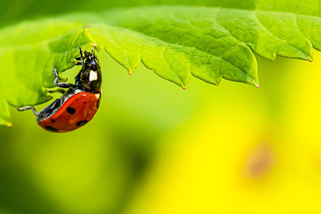 Ladybug On The Edge by Guy Wright