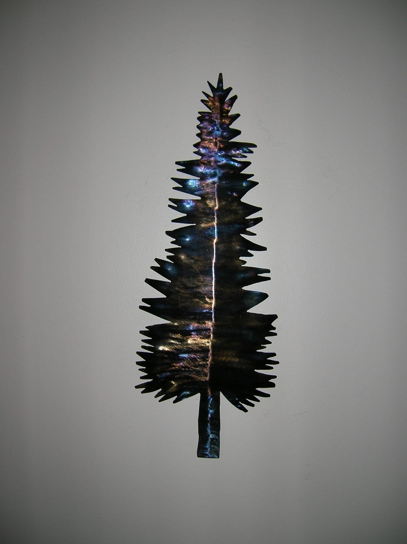Douglas fir by Al Matchett