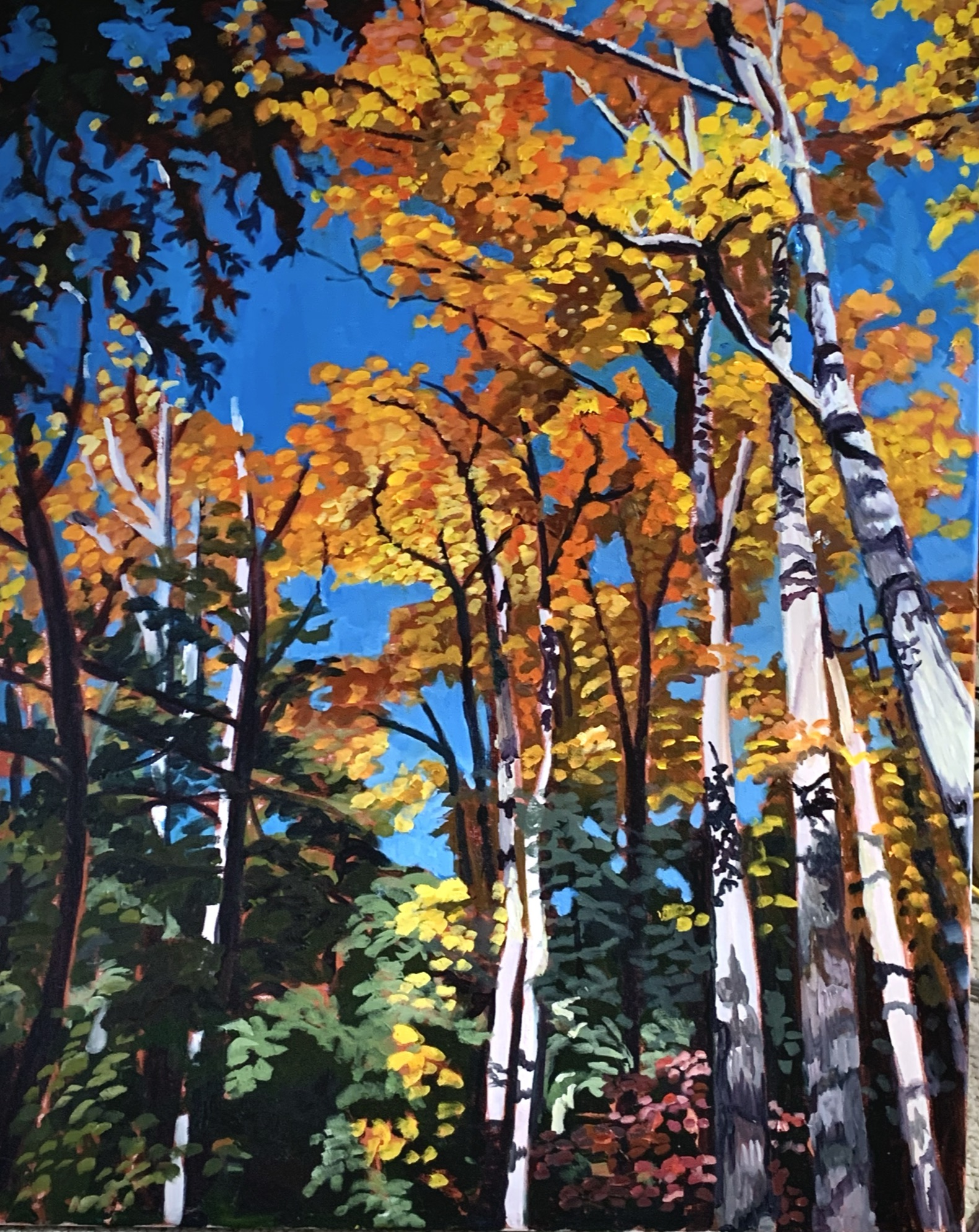 Looking up at the Canopy, Crawford Lake ON by Lynne Ryall