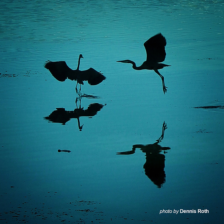 Into Still Water ~ Photo by Dennis Roth